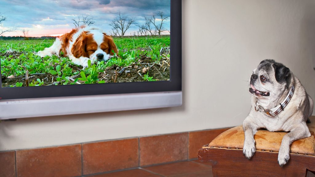 Make him watch television | Dog care tips