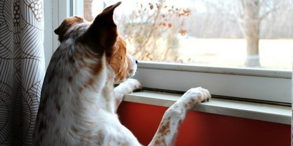Dog watching through window | Dog care tips