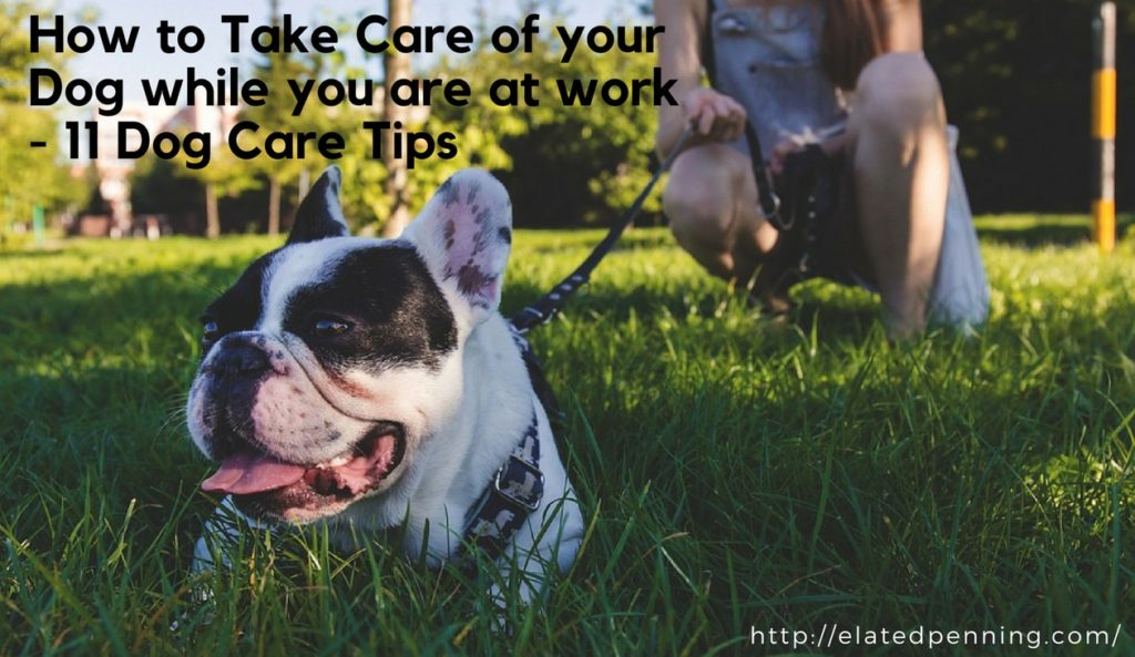 How to Take Care of your Dog while you are at work – 11 Dog Care Tips