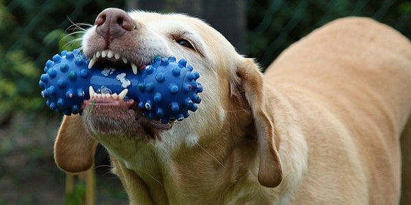 Dental Chew Toys | Dog care tips